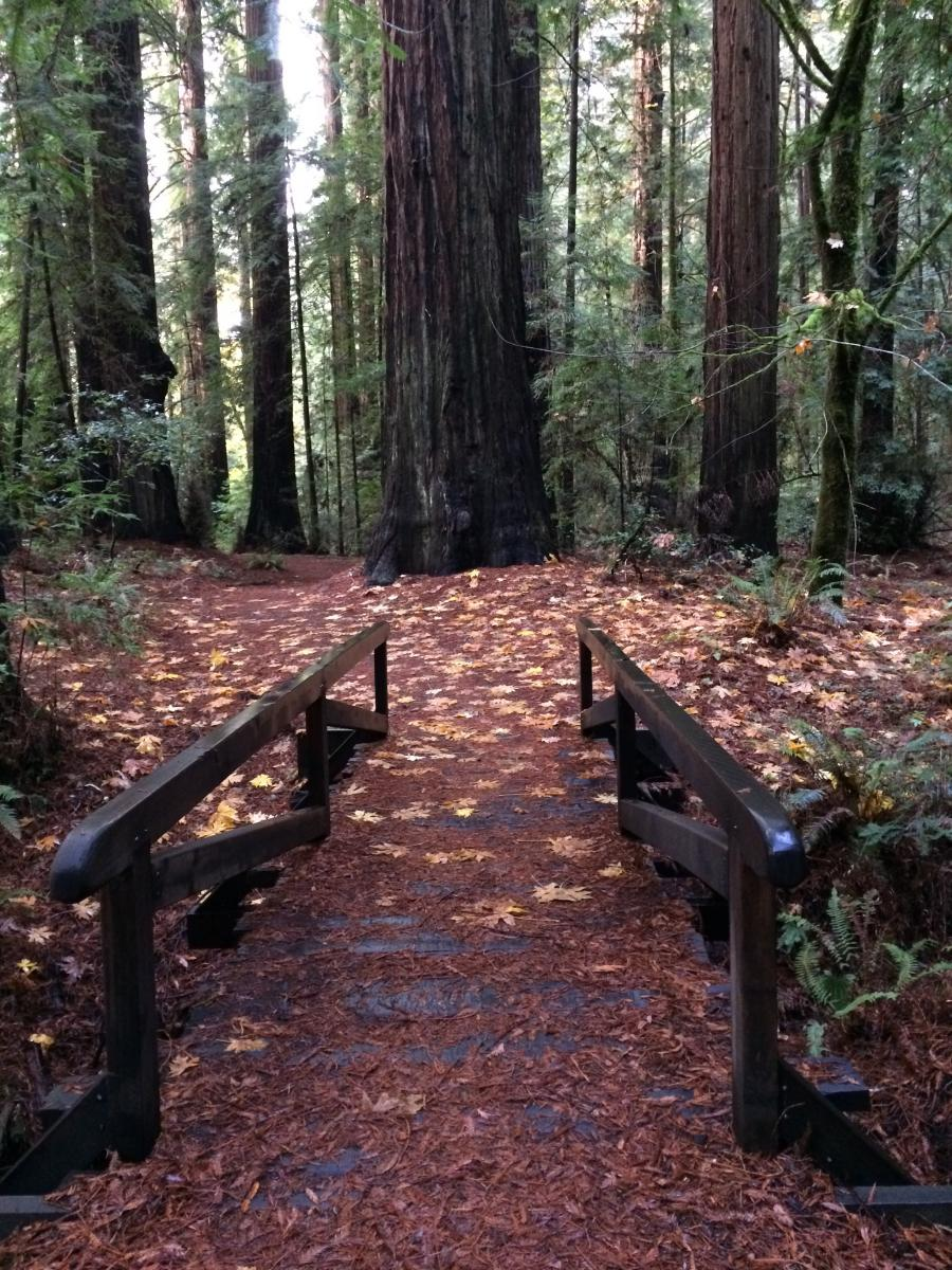 All campgrounds in Humboldt Redwoods State Park will be paved starting  August 2018. As a result, no reservations will be available during paving.