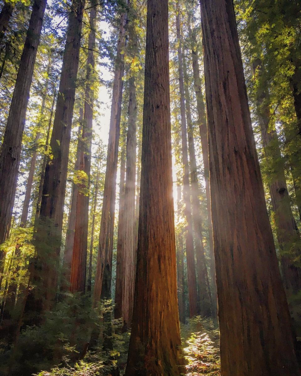 Special Events Weddings School Groups Humboldt Redwoods