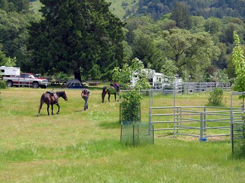 Cuneo Creek Horse Camp Humboldt Redwoods Interpretive